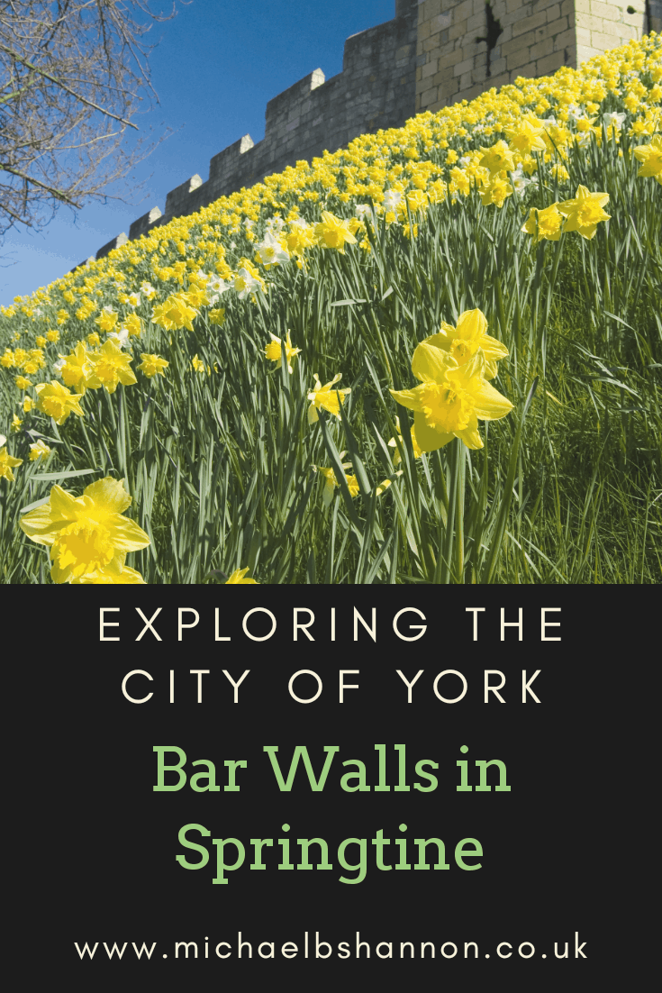 Daffodils cover the York Bar Walls in Springtime